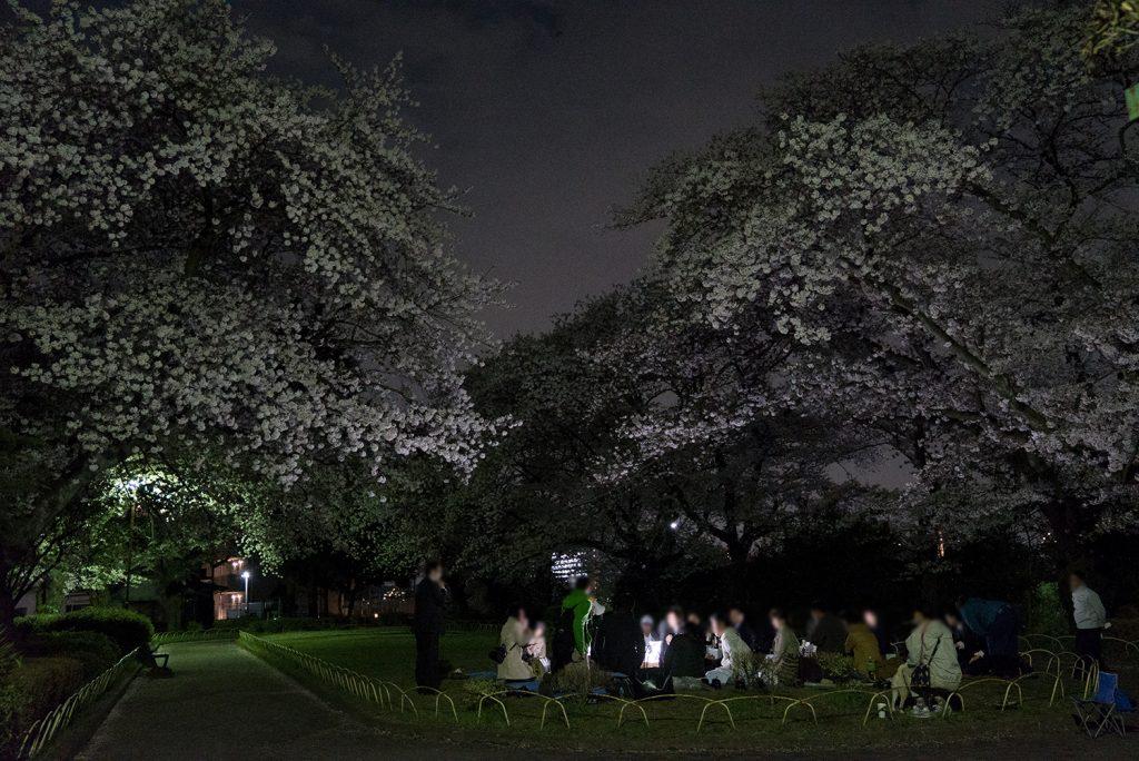東京八王子空いている穴場夜桜スポット2017