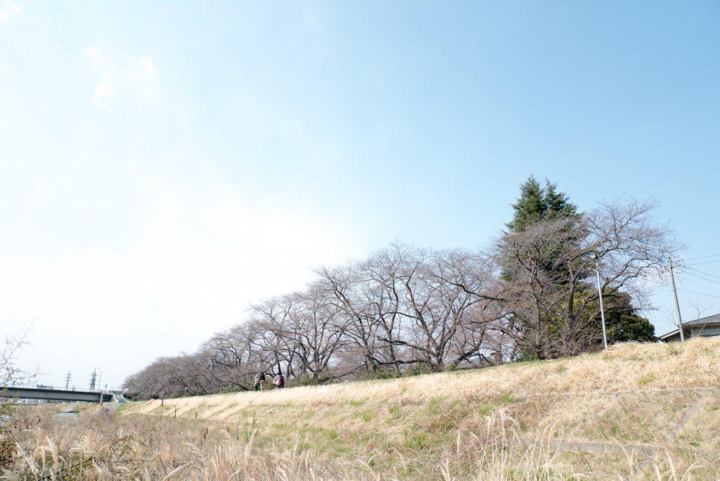 浅川 元横山公園