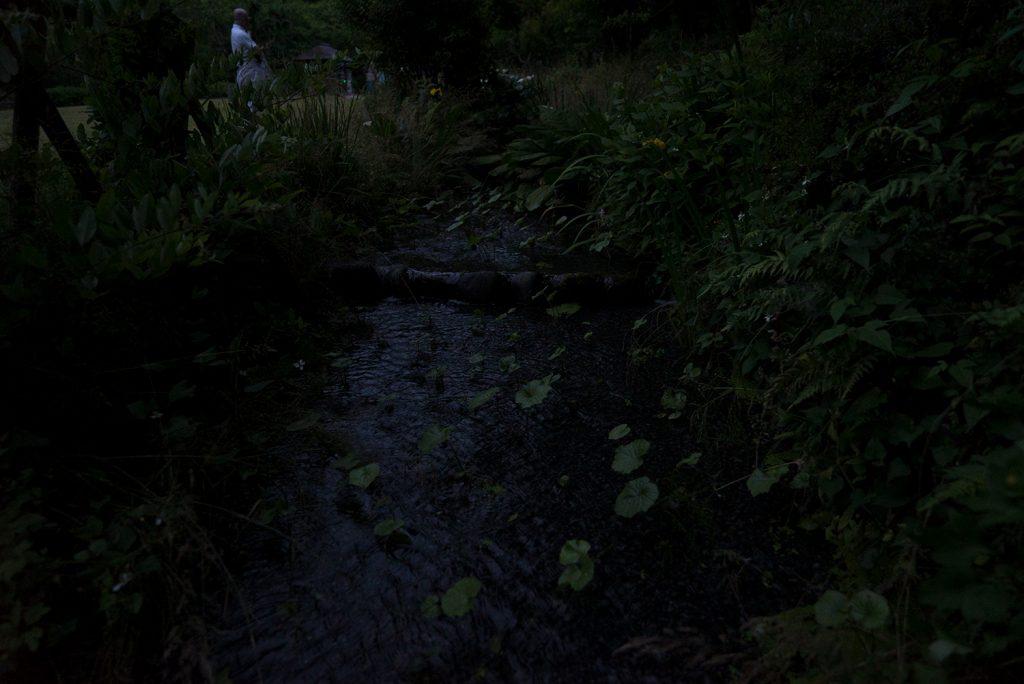 蛍ホタル花高画質夕やけ小やけの里八王子ホタルの夕べ