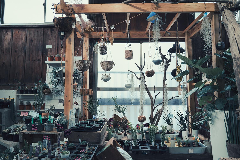 Vent Vert(ヴァン・ベール)!!八王子で発見した宇宙の植物!?