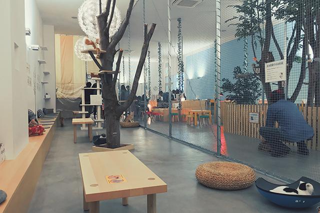 八王子の猫カフェ?!動物園?!小動物を触って楽しめるMoff!!