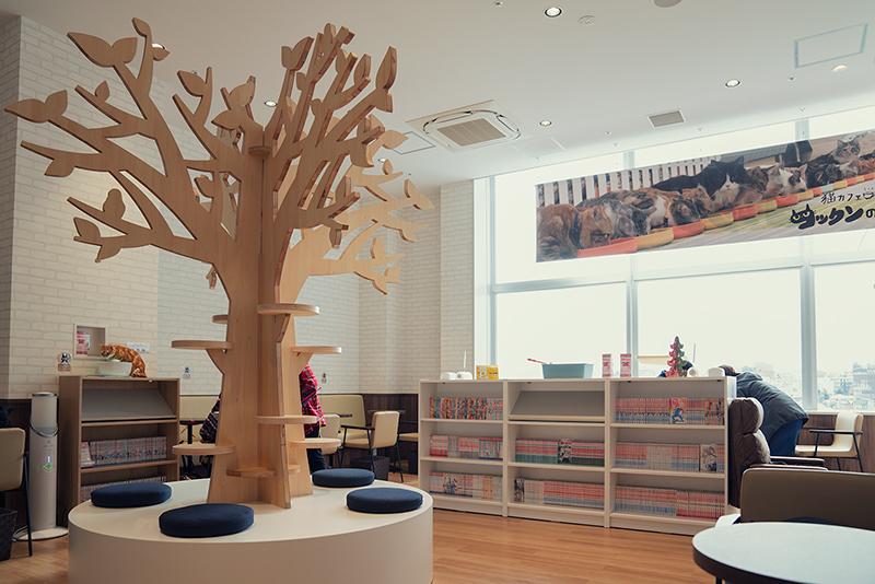 猫カフェ コックンの別荘 八王子OPA(オーパ)店 内観