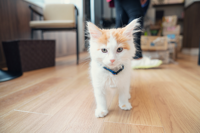 猫カフェ コックンの別荘 八王子OPA(オーパ)店 猫