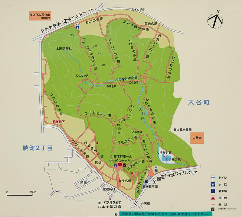八王子のおすすめ初日の出スポット小宮公園!! 菜の花畑を見ながら御来光!!