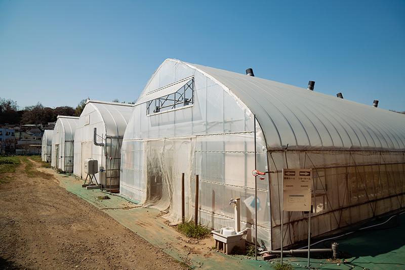 中西ファーム サンホープ農園 ビニールハウス