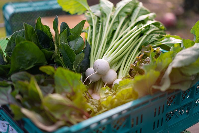 中西ファーム 収穫 野菜