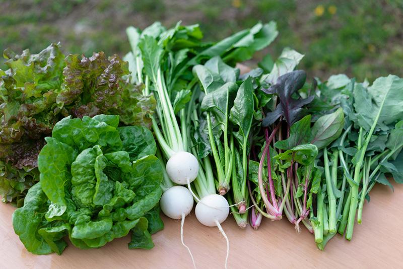 中西ファーム カブ 野菜