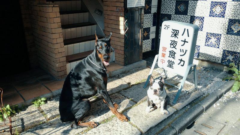 ハナヅカ深夜食堂 ペットok わんちゃん ワンちゃん 犬 猫 レストラン