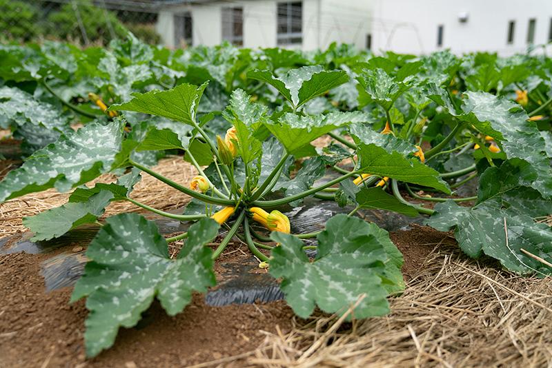 尾崎農園|採れたて八王子野菜がネットで買える!!