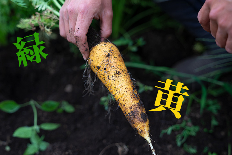 キテレツファームの彩り豊かな夏野菜と畑